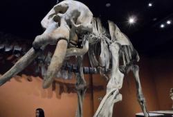 Museu PUC MINAS / 2º Período & 1º ANO - 2015